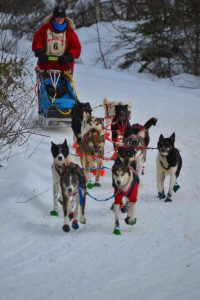 Musher and Dogs