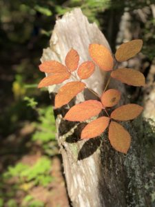 Fall Colors on Leveaux Mountain Hike