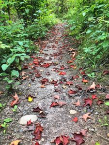 Fall Leaves on Hiking Trail at Lutsen Mountains