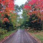 Honeymoon Trail Fall Maple Trees