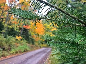 Honeymoon Trail in Tofte on a Rainy Fall Day