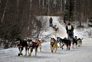John Beargrease Sled Dog Marathon. Calendar Contest Winner