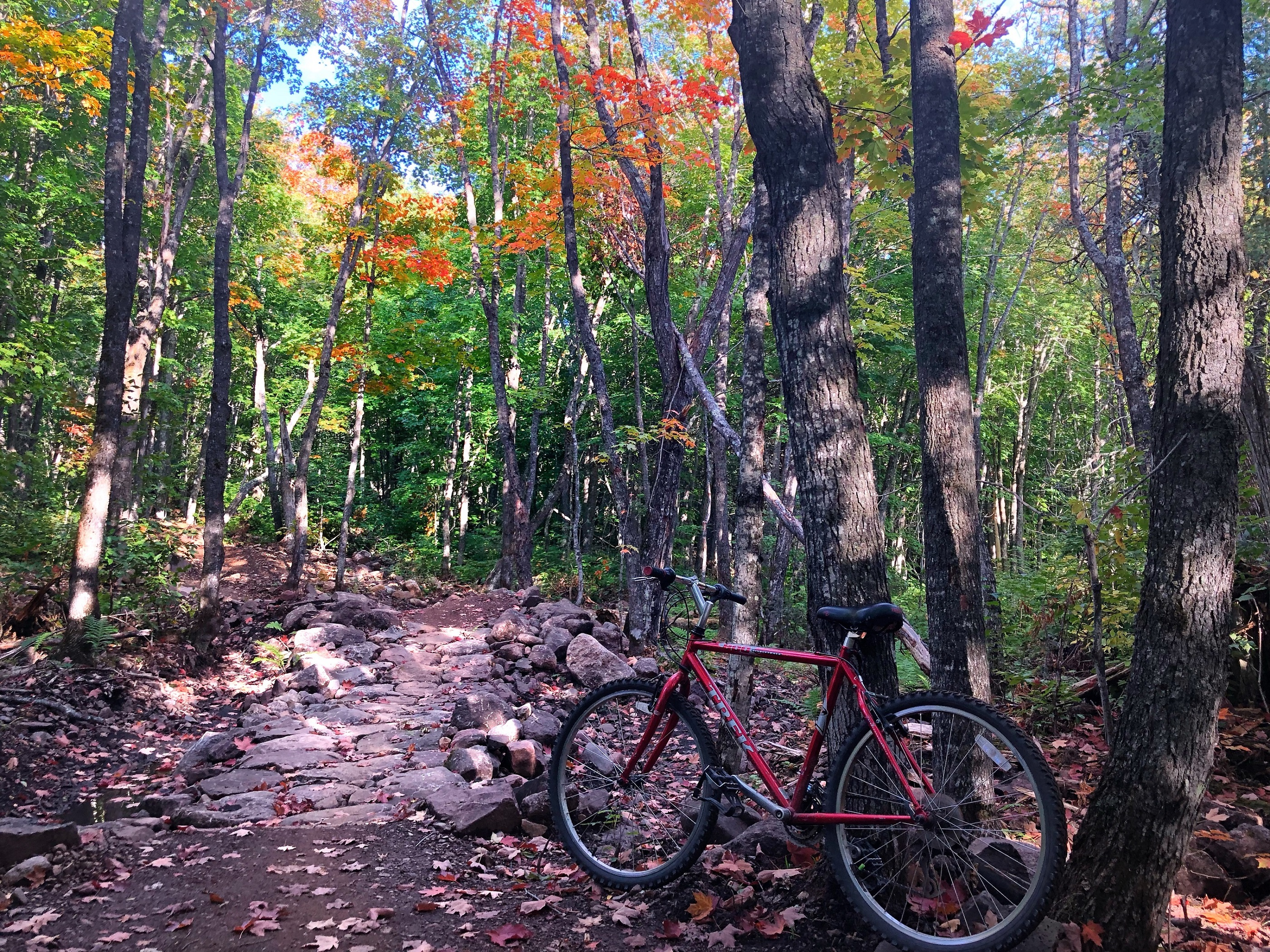 Jackpot flow mountain biking trail tofte