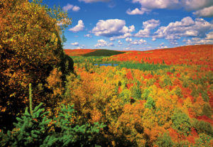 Fall color from Oberg Mountains